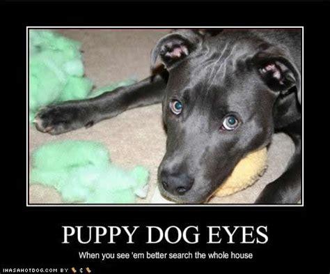 Puppy Dog Eyes Meme - armitage the animal kingdom the armitage effect