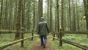 Student Guy Walking In The Park, Forest Through The Trees ...