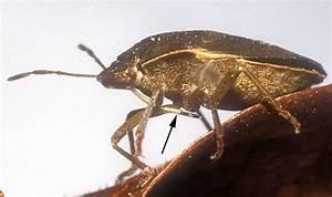 Insecte De Maison : les insectes ~ Melissatoandfro.com Idées de Décoration