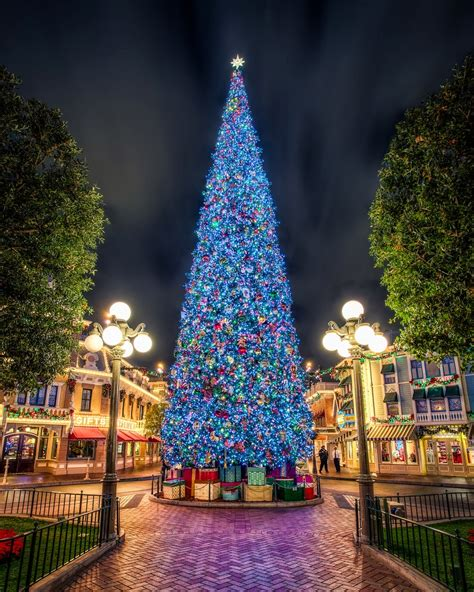 disney world christmas trees my class the christmas tree 2957