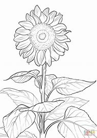 Best Sunflower Template - ideas and images on Bing | Find what you ...