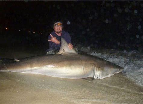 shark florida caught beach ever shore panama sharks fishing exclusive been night were doing dark peterlin amanda rods decades crew