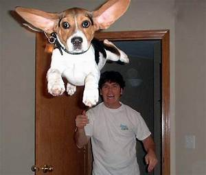 10 funny photoshop dogs