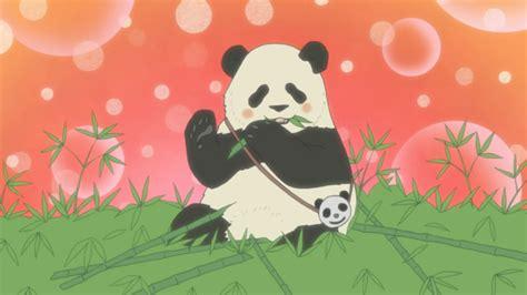 anime panda wallpaper 70 images