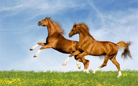 foto kuda seputar semarang