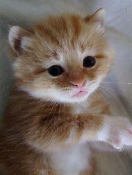 Little Kitty Cat Kitten