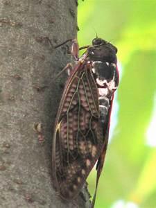 Insekten Im Zimmer Was Tun : carpe diem 2 2 insekten in japan und deutschland ~ Markanthonyermac.com Haus und Dekorationen