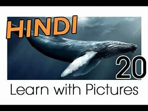Learn Hindi Vocabulary with Pictures - Marine Animals ...