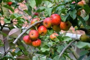 Apfelbaum Schneiden Wann : apfelbaum schneiden vorgehensweise garten mix ~ Watch28wear.com Haus und Dekorationen