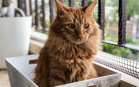 magen darm erkrankungen bei katzen petpharmde