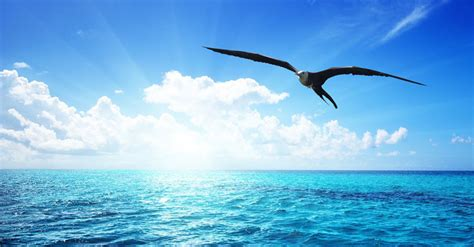 Gabbiano Jonathan Livingston by Il Gabbiano Jonathan Livingston Di Richard Bach Radio Deejay