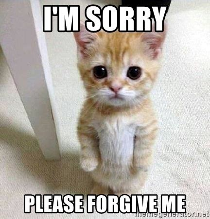 Forgive Me Meme - i m sorry please forgive me sorry kitty meme generator