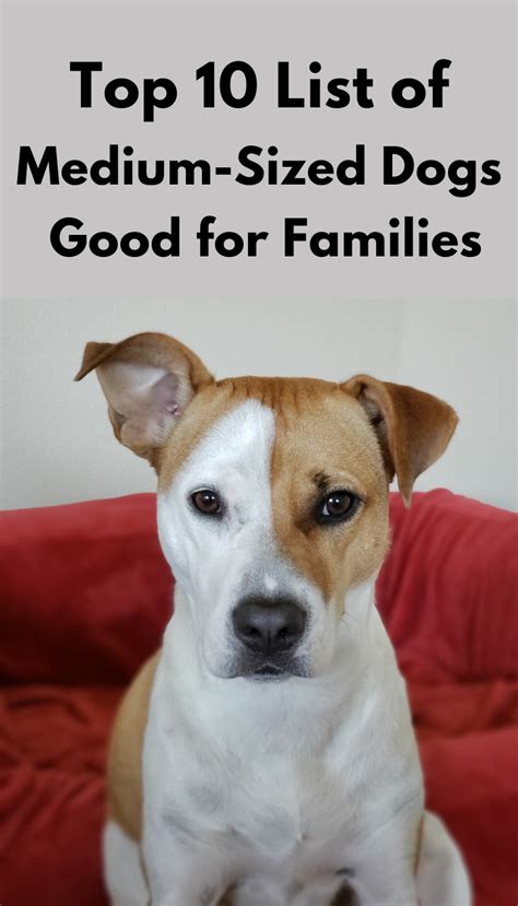 dogs sized looking dog breeds families friendly list pounds weigh working puppy