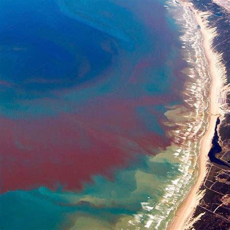 florida red tide