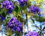 Violeteira - Foto e Árvore   Flores - Cultura Mix