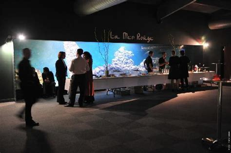 les requins photo de aquarium le 7eme continent talmont hilaire tripadvisor