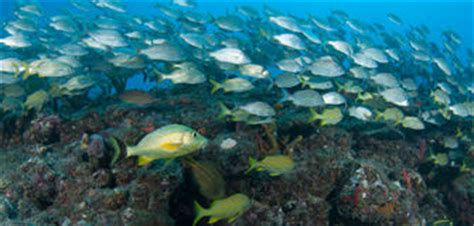 atlantic ocean species fish stock images