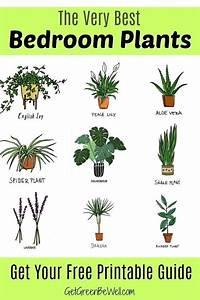 Zimmerpflanzen Für Schlafzimmer : gr ne zimmerpflanzen beste zimmerpflanzen f r besseren ~ A.2002-acura-tl-radio.info Haus und Dekorationen
