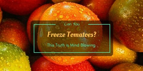 can you freeze tomatoes can you freeze tomatoes this truth is mind blowing