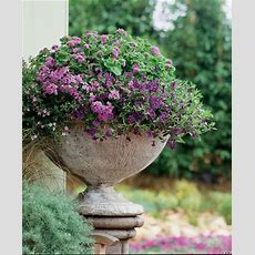 Container Garden Design  Color  Proven Winners