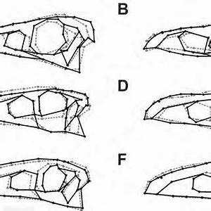 Diversity of skull shapes in theropod dinosaurs. A. basal ...