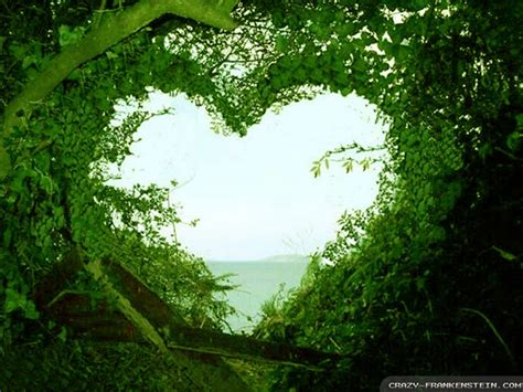 Beautiful Love Nature Wallpapers For Freejpg
