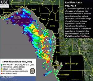 Red Tide Satellite Images Images HD Download