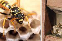 Se Débarrasser Des Guepes : se d barrasser des nuisibles fourmis puces souris ~ Melissatoandfro.com Idées de Décoration