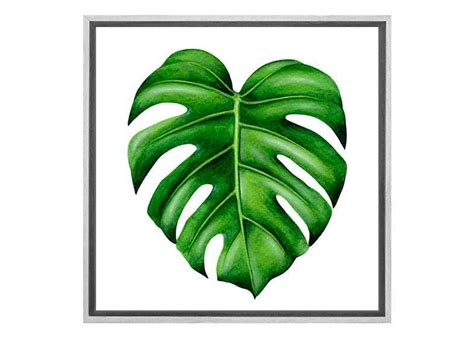 buy monstera leaf canvas wall art print  australia