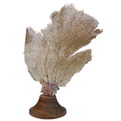 sea fans for sale decorative sea fan on wooden stand at 1stdibs