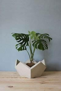 Balkonpflanzen Hängend Pflegeleicht : zimmerpflanzen f r dunkle r ume geeignet drachenbaum ~ Lizthompson.info Haus und Dekorationen
