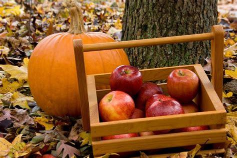 pick   apples  pumpkins  washington