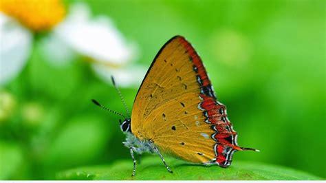 Full Hd Nature Wallpapers 1080p Desktop With Macro Photo