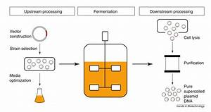 Downstream Processing Of Plasmid Dna For Gene Therapy And