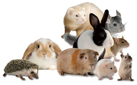 top  popular small pets  dogs life hatboro