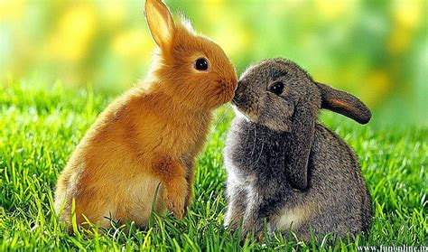 cute baby bunny wallpaper  hd wallpapers