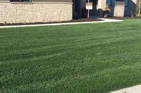grass seed lawn repair turf type fescue l 4th millennium l tmi turf merchants