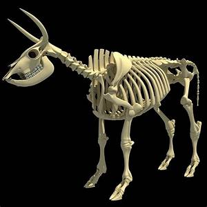 Cow Bone Skeletal 3d Model