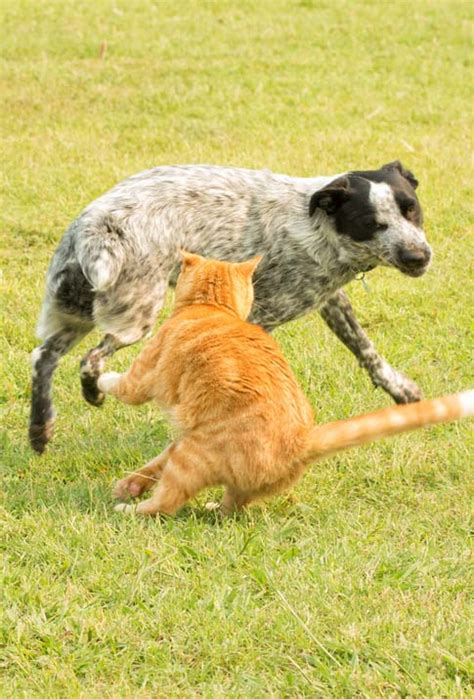 scared dog cats cat why dogs along things them