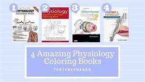 Our 4 Top Physiology Coloring Books Recommendations