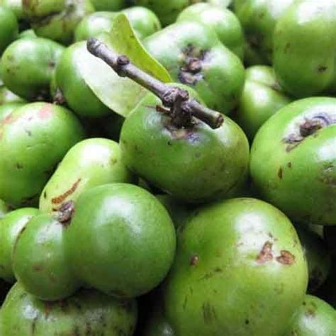 fruit taste batuan fruit it is a fruit with a very sour taste they are mostly used as a souring agent in
