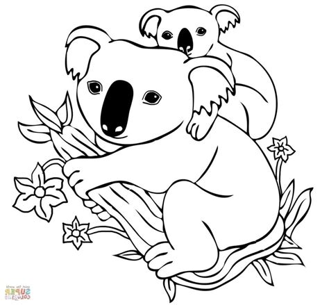 Secrets Coloring Pages Of Koalas Wanted Koala Pictures To