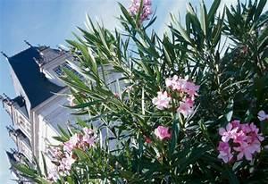 Welche Pflanzen Gegen Wespen : giftige pflanzen giftige pflanzen pin giftige pflanzen on ~ Lizthompson.info Haus und Dekorationen
