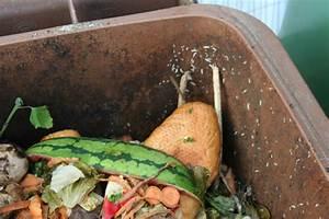 Maden In Der Mülltonne : biologisch abbaubare abfalls cke f r saubere m lltonnen ~ Indierocktalk.com Haus und Dekorationen