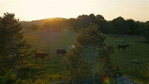 Black Horse On Green Grassy Hillside Stock Footage Video ...
