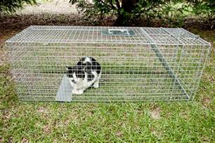 humane traps for cats why getting involved in tnr is easier than you think catster