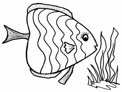 Fish Coloring Pages Realistic Butterfly Sea Preschool