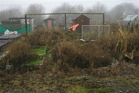 clearing   allotment  vegetable plot