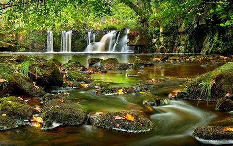 Forest River Desktop Background 491597