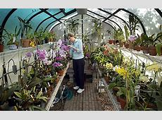 Caring for Orchids It's not as hard as you think